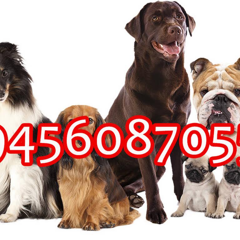 A2Z Pets Mania in Dehradun