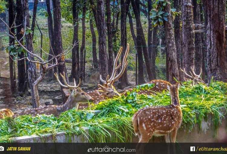 Malsi Deer Park in dehradun